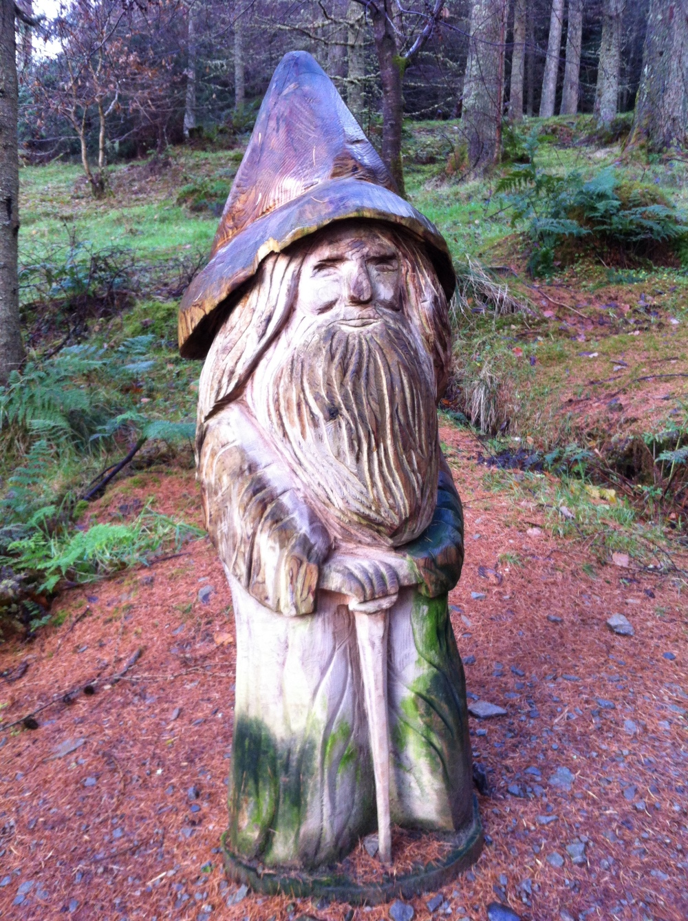 Wise old man of the forest