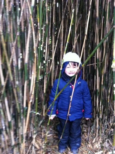 Cambo bamboo